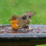 Best Place to Position Your Bird Bath
